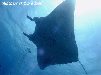 100621ishigaki73web_2
