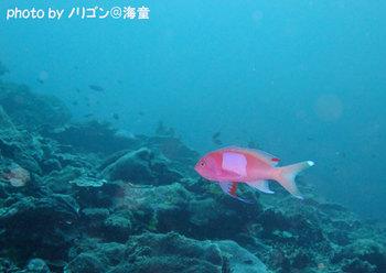 100621ishigaki169web