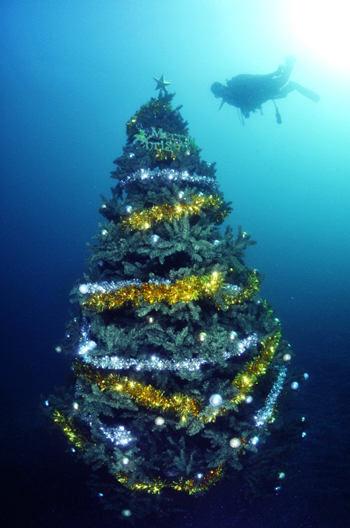 2011xmastree1web
